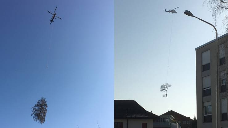 In Derendingen werden 20 Bäume gefällt und mit dem Helikopter aus dem Quartier geflogen