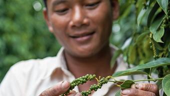 Die kambodschanischen Pfefferbauern sollen mit Hilfe von Spenden aus der Schweiz besser geschult werden.