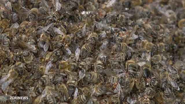 Bienensterben: 1 Million Tiere vergiftet