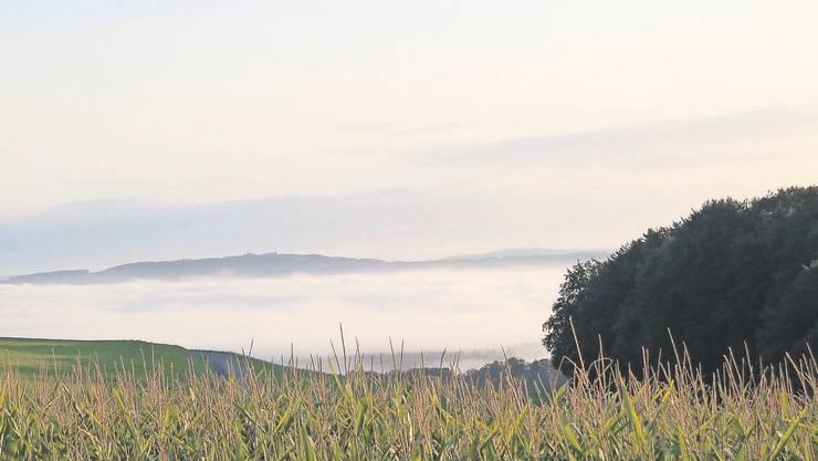Im Kanton Aargau gibt es vor allem im Freiamt viel Bodennebel.
