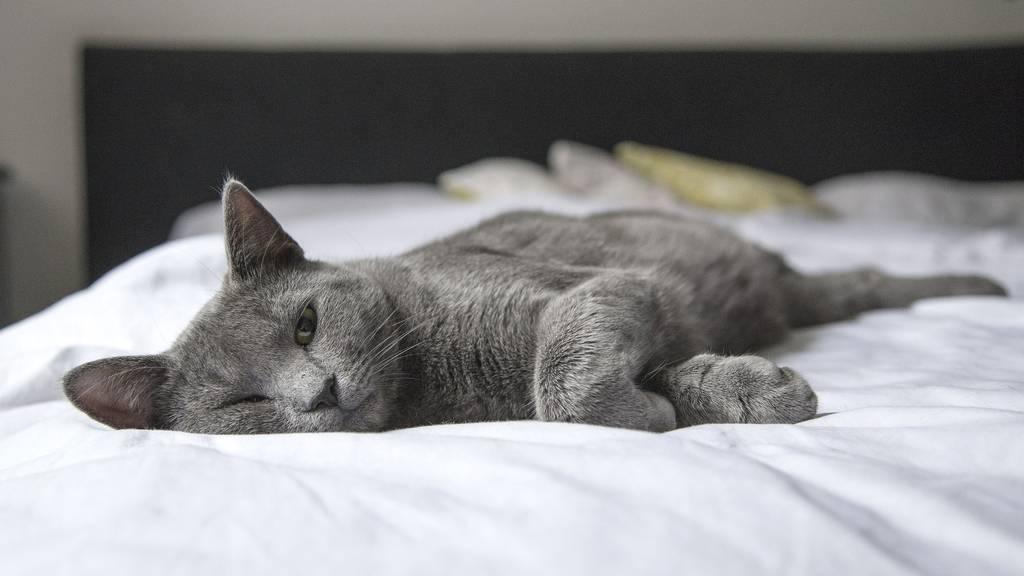 Ist der Besitzer ausser Haus, leiden auch Katzen