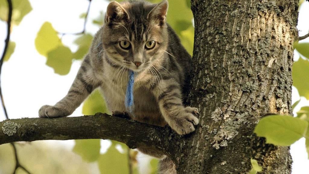 Wenn die Feuerwehr eine Katze retten muss, kann es teuer werden.