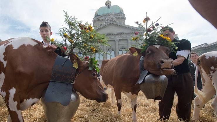 Die beiden Bereiche Verwaltung und Landwirtschaft wurden in der Umfrage von Avenir Suisse mit Abstand am häufigsten genannt. (Archivbild)