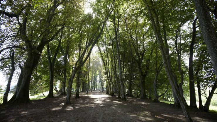 Frische, kühle Luft – ein Spaziergang zwischen den Bäumen ist im Sommer ideal.