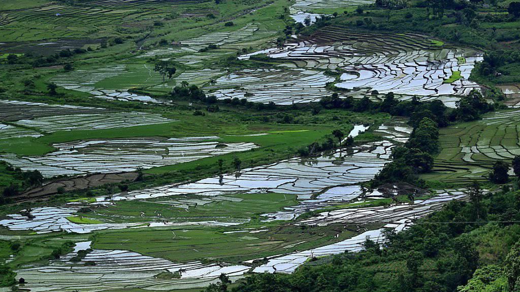 Indien-Reisen - hier Terrassenfelder in Jowa - enden häufig mit multiresistenten Keimen im Darm. (Archivbild)