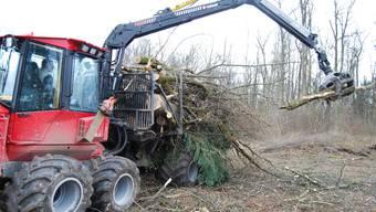 Vorarbeit zur Kiesgewinnung Rodungen und Waldarbeiten. (sl)