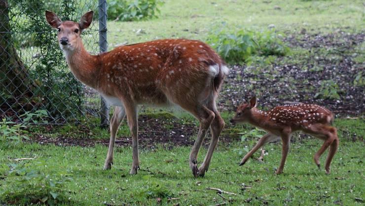 Waltenschwil Tierpark