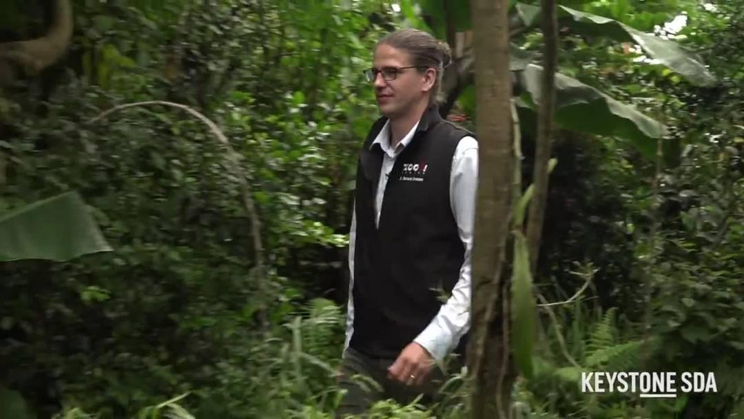 Der neue Zoodirektor und seine Tiere