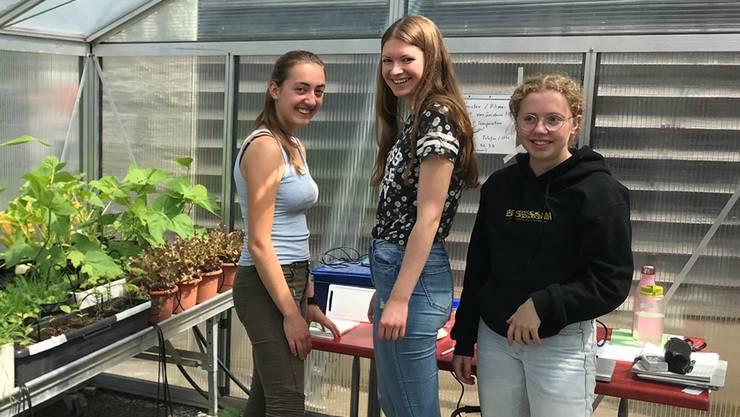 In Gewächshäusern testen Schülerinnen und Schüler der Kantonsschule Wettingen die Auswirkungen des Klimawandels.