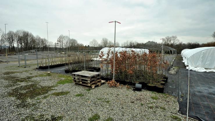 Hauenstein-Areal im Gebiet Waagacher. Die Bauprofile betreffen provisorische, bereits bewilligte Bauten.