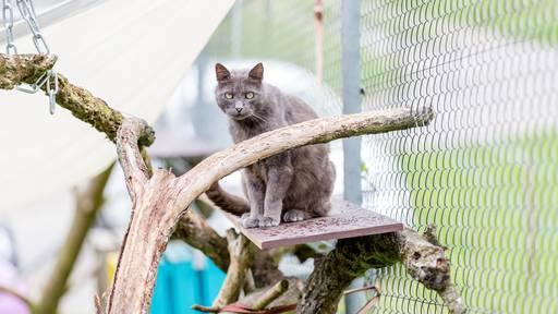 Tierschutz erleichtert: «Information führt nicht zu mehr ausgesetzten Tieren»