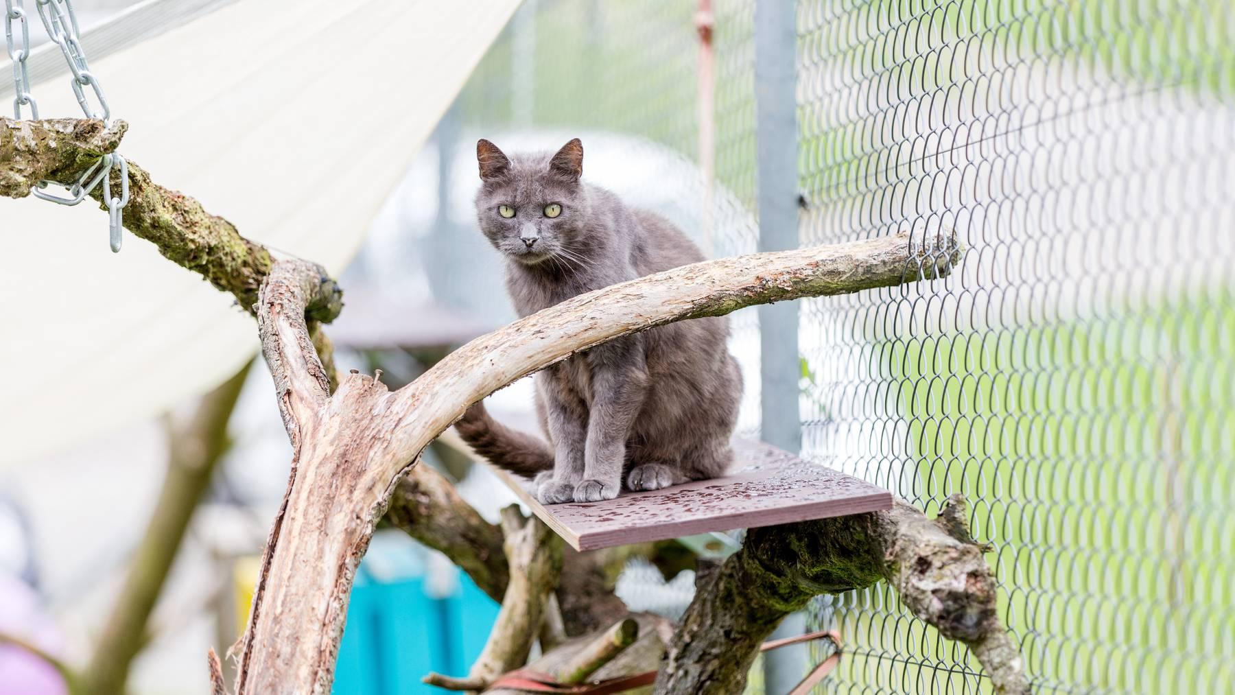 Der Ansturm auf die Tierheime wegen Corona bleibt aus – und zwar im Tessin wie in der Romandie, so eine Umfrage des Schweizer Tierschutz. (Symbolbild)
