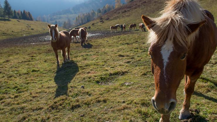 Eine Stiftung, die kranke und alte Pferde aufnimmt, kommt nicht in den Genuss einer Steuerbefreiung. (Symbolbild)