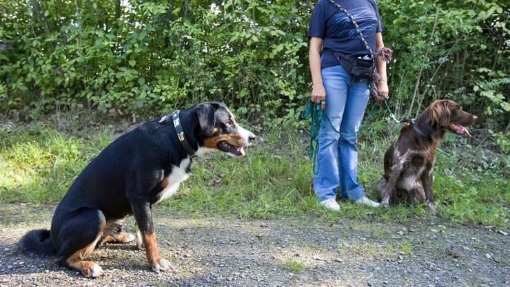Hunde müssen in Zukunft auf dem Fischerweg und der Werdinsel an die Leine.