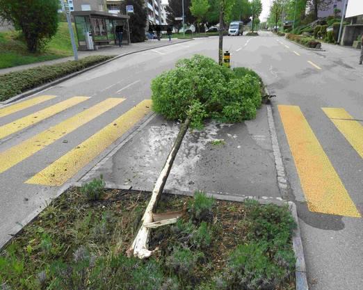 Diesen Baum fuhr sie um.