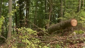 Zum Drama kam es in Bönigen bei Interlaken. Ein Sturm blies heute Morgen mehrere Bäume um, einer davon traf das Zelt einer Familie aus Lettland. Dabei wurde ein Mädchen getötet.