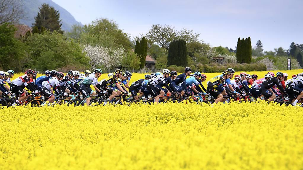Das Feld der Tour de Suisse rollt 2021 wieder durch die Schweiz.