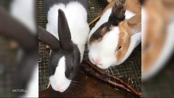 Die zwei Kaninchen des 10-jährigen Manuels wurden von einem Hund tot gebissen. Besonders bitter: Die Kaninchen waren erst ein Jahr alt.