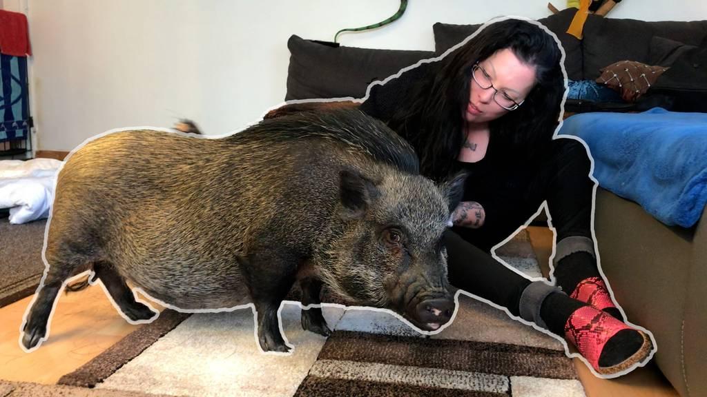 Aussergewöhnliche WG: Diese Frau lebt mit Schweinen