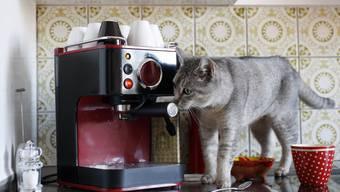 Mieterverband will, dass Mieter in allen Wohnungen Haustiere halten dürfen