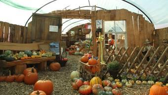 Die Wohnlandschaft für Kürbisse in Kirchleerau wird nächstes Jahr an einen anderen Standort ziehen .