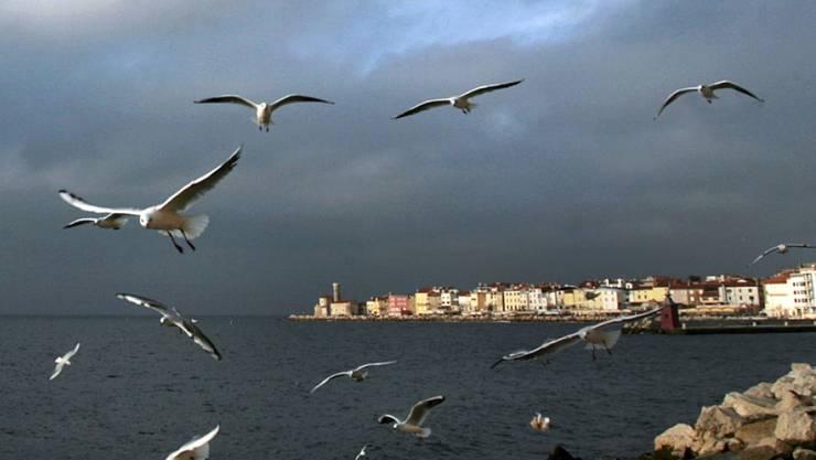 Kroatien und Slowenien streiten sich seit 25 Jahren um die Bucht von Piran (Archiv)