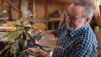 Edi Koller fräst am Bonsai seiner Kollegin Romy Furrer. Eine Totholzlinie soll die Lärche alt wirken lassen. Fabio Vonarburg