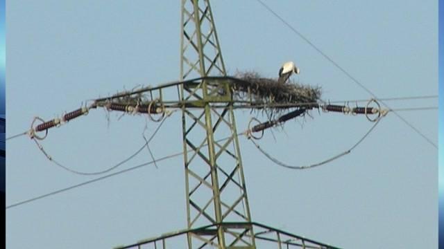 Geschützter Storch aus Deitingen vertrieben