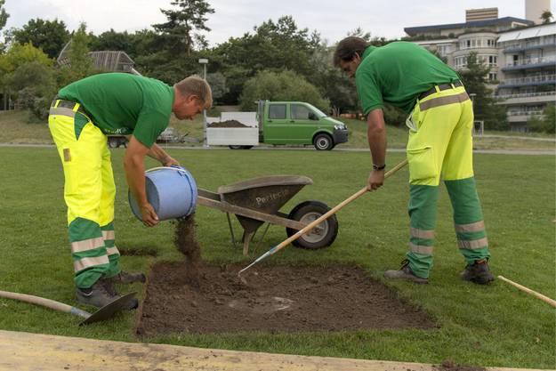 Mitarbeiter der Stadtgärtnerei reparieren ein Brandloch im Rasen.