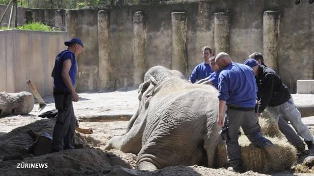 Elefanten ausser Rand und Band