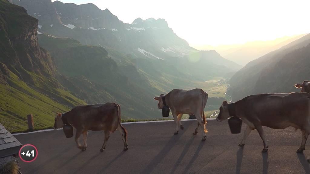 Alpsommer - Auffahren mit Kempfs