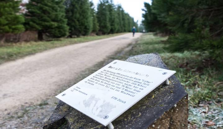"""Eine Tafel bei der nach dem Sturm angeplflanzten Mammutbaumallee bei Ringlikon erinnert an den Sturm """"Lothar"""" vom 26.12.1999."""