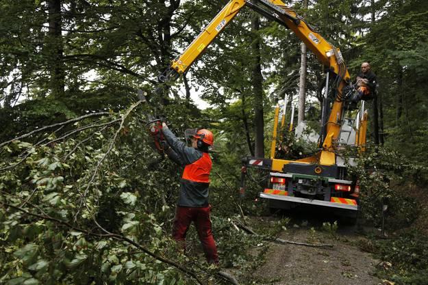 Die Bäume werden für den Transport zurechtgestutzt
