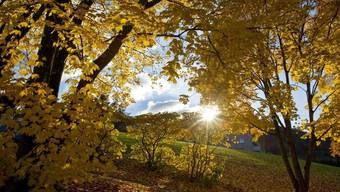 Im November verwöhnt uns die Sonne.
