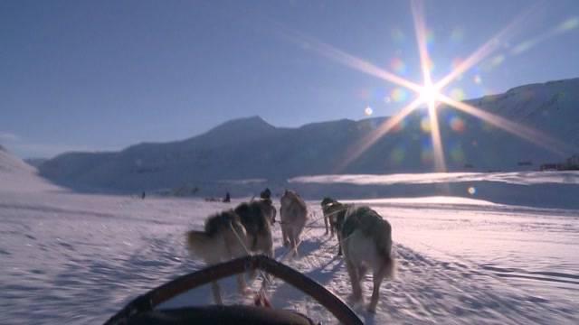 Bär am Nordpol Folge 2