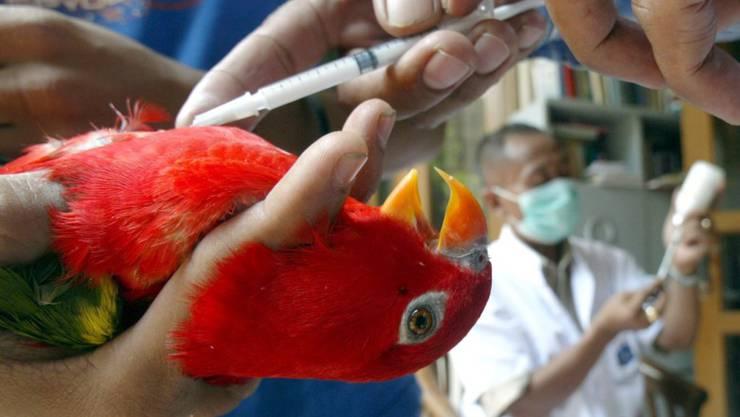 Der Brand in einer Berner Wohnung wurde dem dort lebenden Papagei zum tödlichen Verhängnis. (Symbolbild)