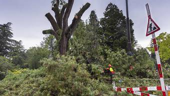 Die Feuerwehr musste wie hier in Genf an verschiedenen Orten Bäume und Äste räumen, die dem starken Unwetter vom vergangenen Samstag nicht standgehalten hatten. (Archivbild)