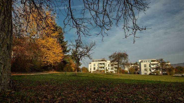 Vorschlag Steiacher in Baden-Rütihof, Im Tobelacher, Parzelle 4557.