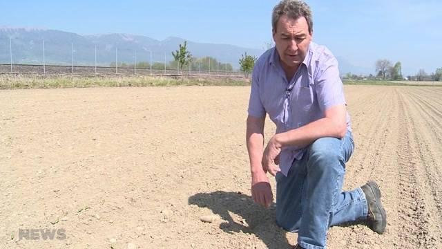 Bauern leiden unter Trockenheit