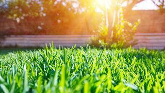 Heute ist der perfekte Rasen grün und nur grün. Als man ihn erfand, waren Blumen hocherwünscht. Aber immer galt: «(Bitte) Rasen nicht betreten!»Shutterstock