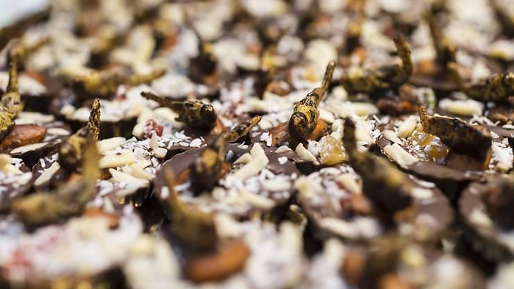 Mit Feldheuschrecken garnierte Pralinen gab es kürzlich an einem Insektenapero im Bundeshaus. (Archivbild)