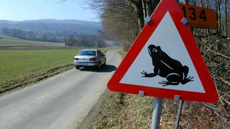 Achtung Frösche: In zwei Jahren sollen Amphibien zwischen Unterrüti und Merenschwand besser vor dem Verkehr geschützt sein.