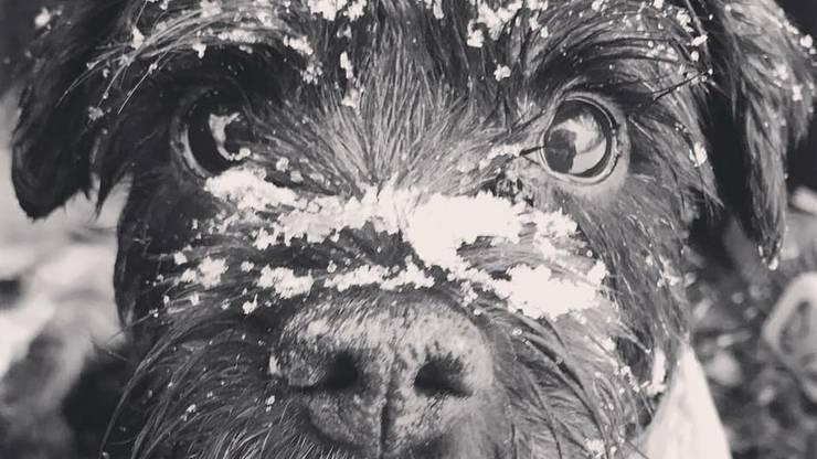 Auch Hund Kenny liebt den Schnee.