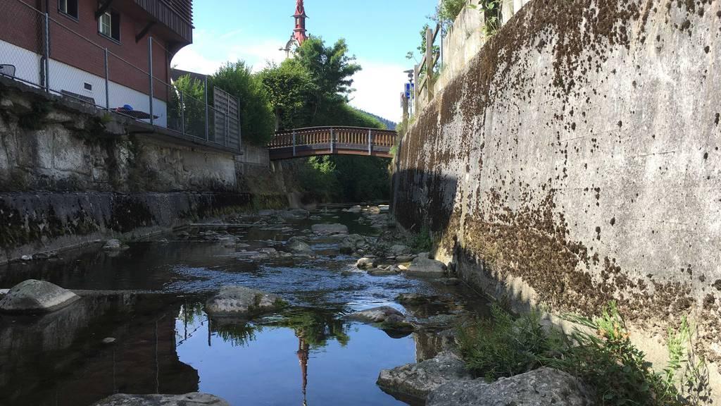 50 tote Fische im Dorfbach in Oberägeri