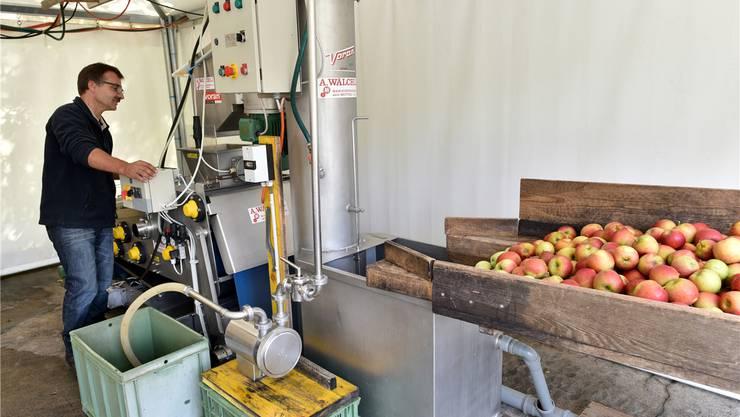Die Äpfel sind bereit, zu leckerem Süssmost verarbeitet zu werden. Hofbetreiber André Erni weiss genau, wie es funktioniert.