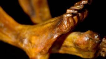 """Eine Nachbildung von Ötzis Körper an der Ausstellung """"Ötzi 2.0"""""""