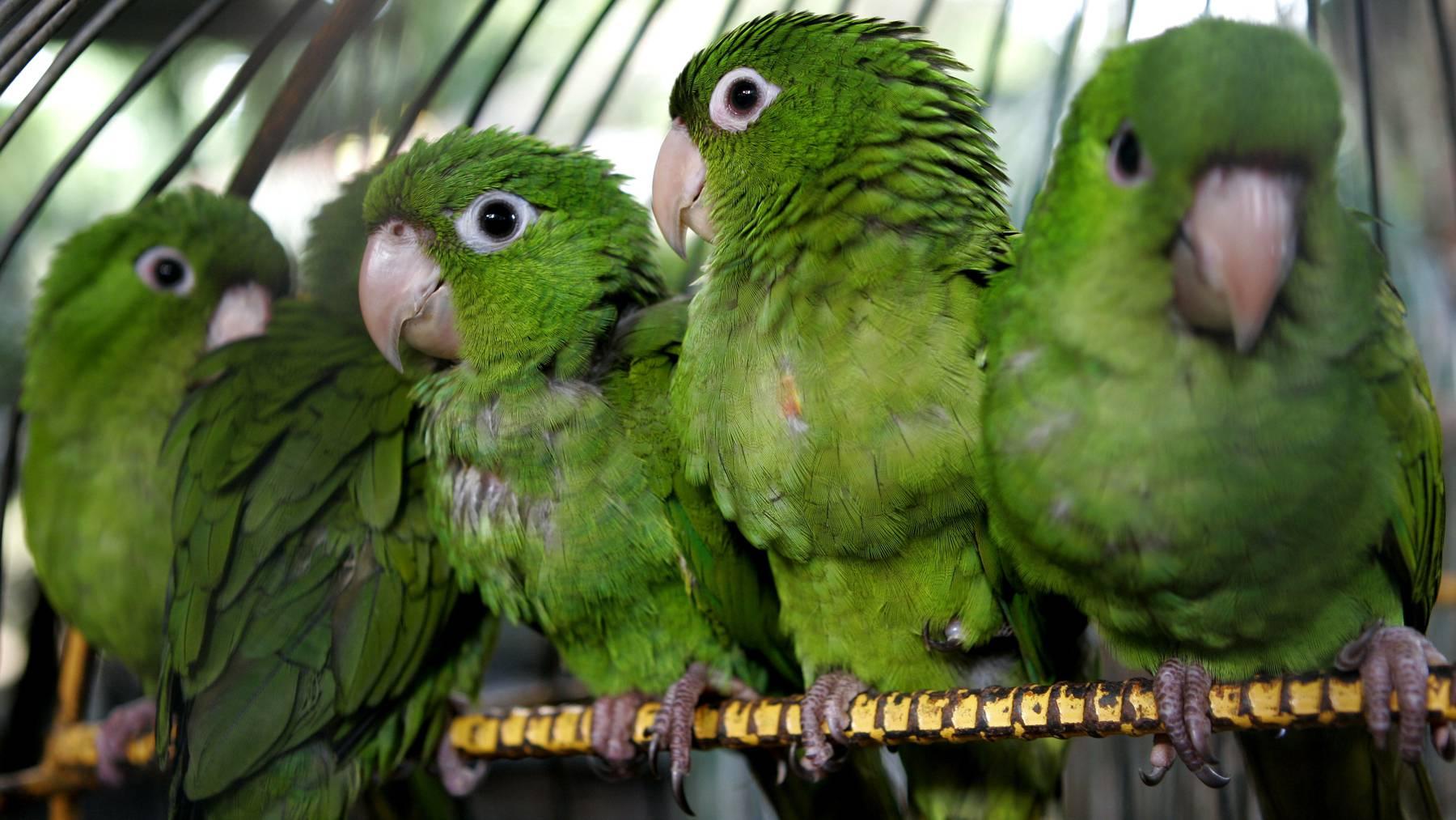 Der Bundesrat will illegalen Tier- und Pflanzenhandel schärfer sanktionieren. (Symbolbild)