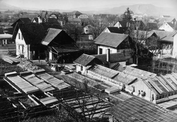 Im Jahr 1938 standen an der Bremgartnerstrasse 39 noch Gewächshäuser. Sie gehörten der Gärtnerei A.Schmid. 1966 wurde dort Alters- und Gesundheitszentrum Ruggacker erstellt. Dies, nachdem eine langjährige Suche nach einem geeigneten Platz für eine solche Einrichtung durch einen Beschluss des Grossen Gemeinderates 1960 endlich ein Ende hatte. Damals wurde der Kauf der Liegenschaft samt Umschwung von 4325 Quadratmetern genehmigt. Der Preis betrug 592 525 Franken. Danach ging es rasch vorwärts. Eine Baukommission wurde eingesetzt und ein Architekturwettbewerb lanciert, der Anfang 1963 abgeschlossen war.