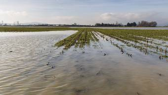 Auch im Januar 2018 waren die Felder in der Witi Grenchen überflutet. Grosse Überschwemmungen gab es aber schon lange nicht mehr.