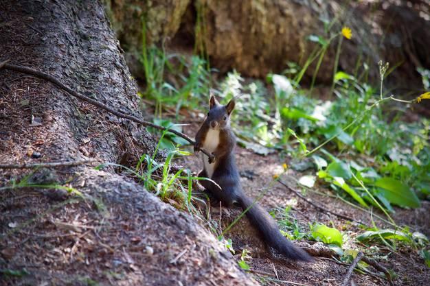 Hi du, mein Name ist Hörnchen und wer bist du?